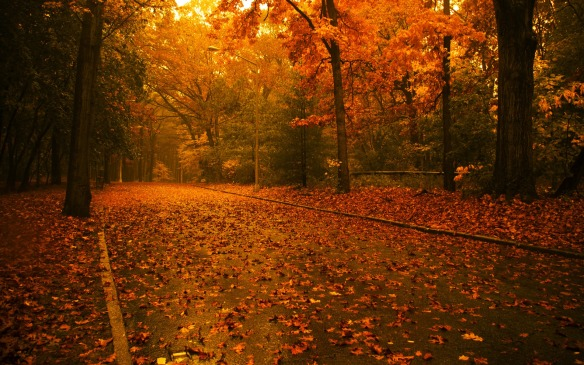 Fall-Wallpaper-Photography-HD